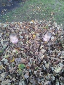 Our HUGE Leaf Pile